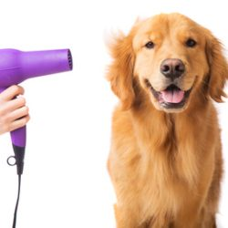 dog grooming tips 1 - smartdog.biz