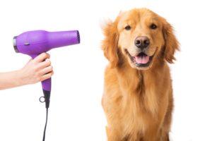 dog grooming tips 1 - smartdog.biz