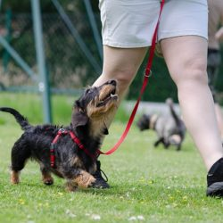 dog training common mistakes - smartdog.biz